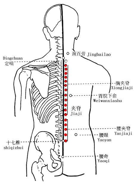 胃脘下俞穴位   胃脘下俞穴痛位置 - 穴道按摩經絡圖解   Source:zhongyibaike.com