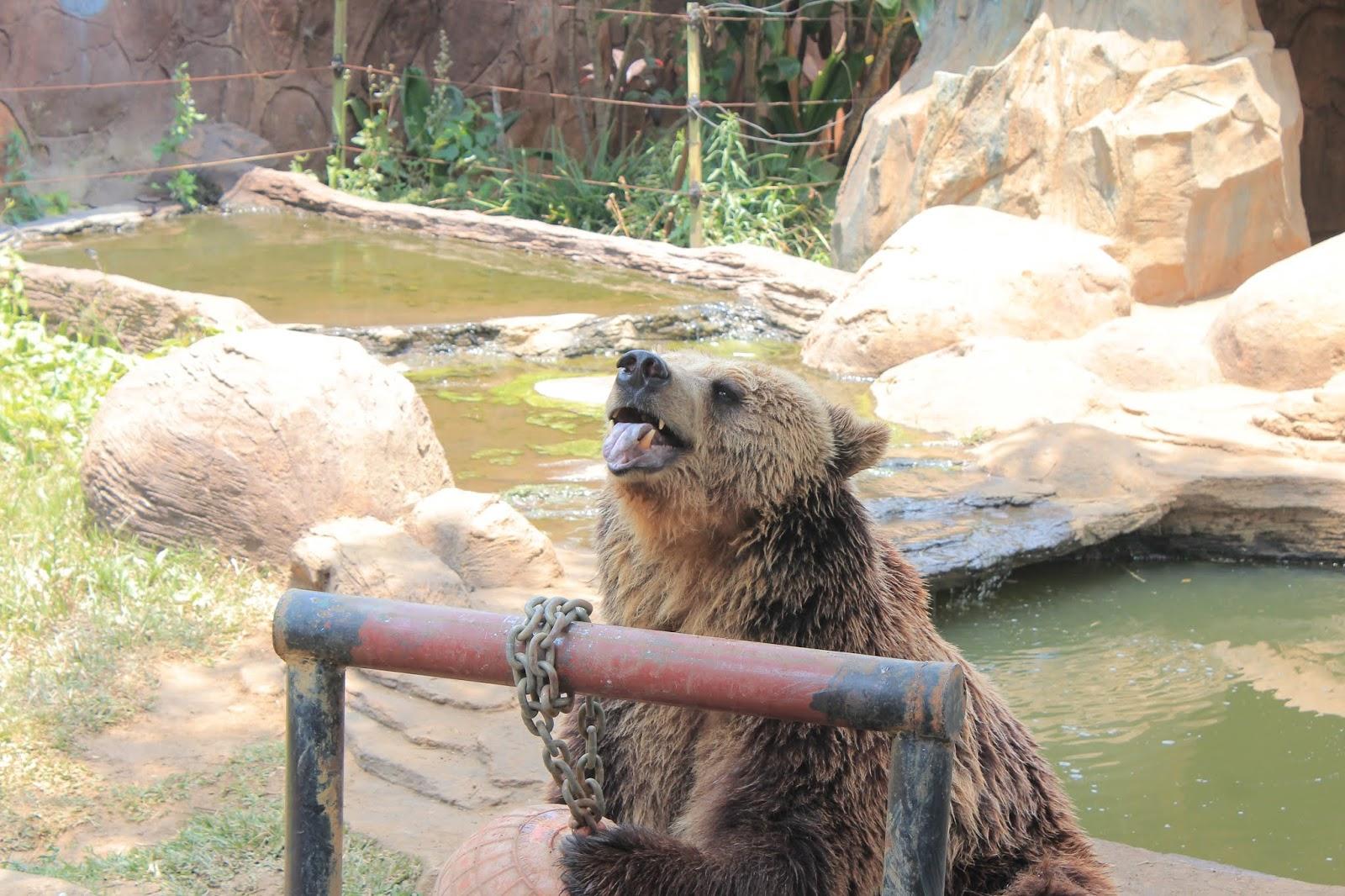 daftar kebun binatang di jawa timur siyo rh siyo site
