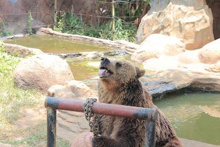 kebun binatang jawa timur, kebun binatang
