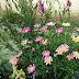 Virágos nyári konténer