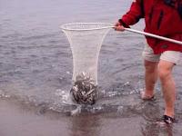 Una pesca muy fácil