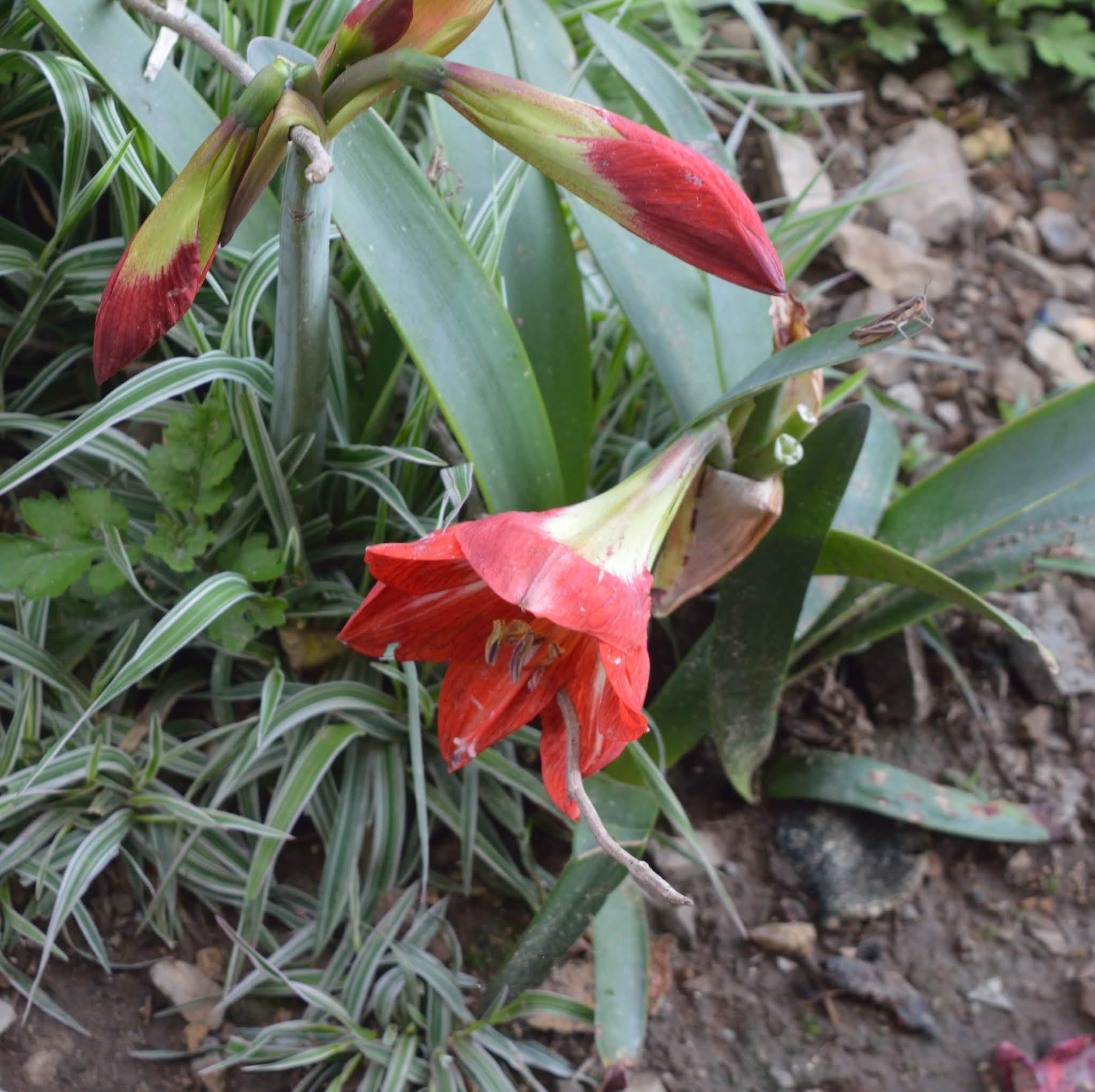 nepal, shiv sangal, scenic beauty, flowers