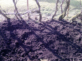 Sloe planting and finding preparing the soil throws up secrets.
