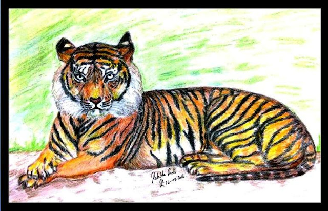 PENCIL DRAWING - TIGER