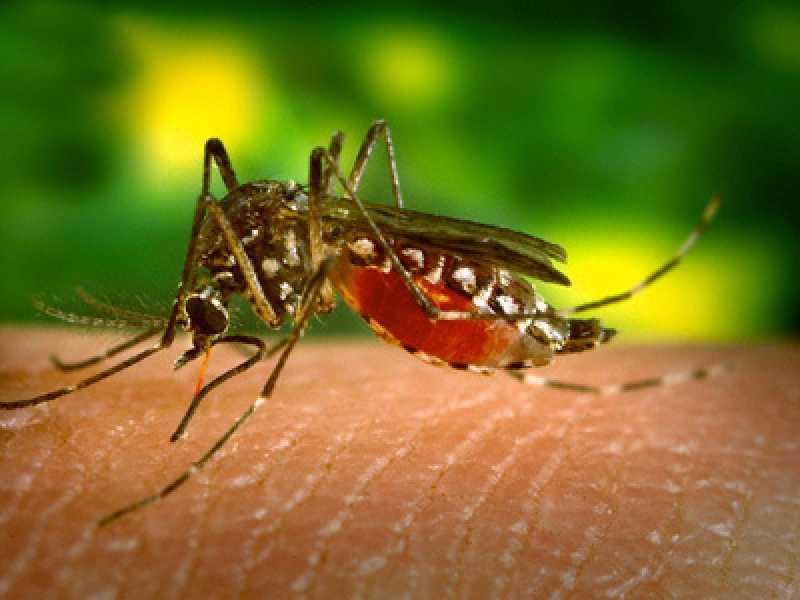 Gejala Virus Zika, Penyebab, Sejarah Penyebaran, Dan Pencegahannya ...