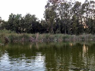 Η Περιφέρεια Αττικής τίθεται αρωγός στη φιλόδοξη προσπάθεια του νεοσυσταθέντος Φορέα Διαχείρισης Μητροπολιτικού Πάρκου «Αντώνης Τρίτσης»