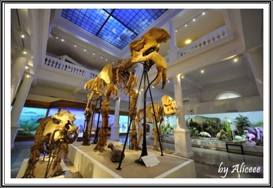 muzeul-antipa-bucuresti-dinozauri