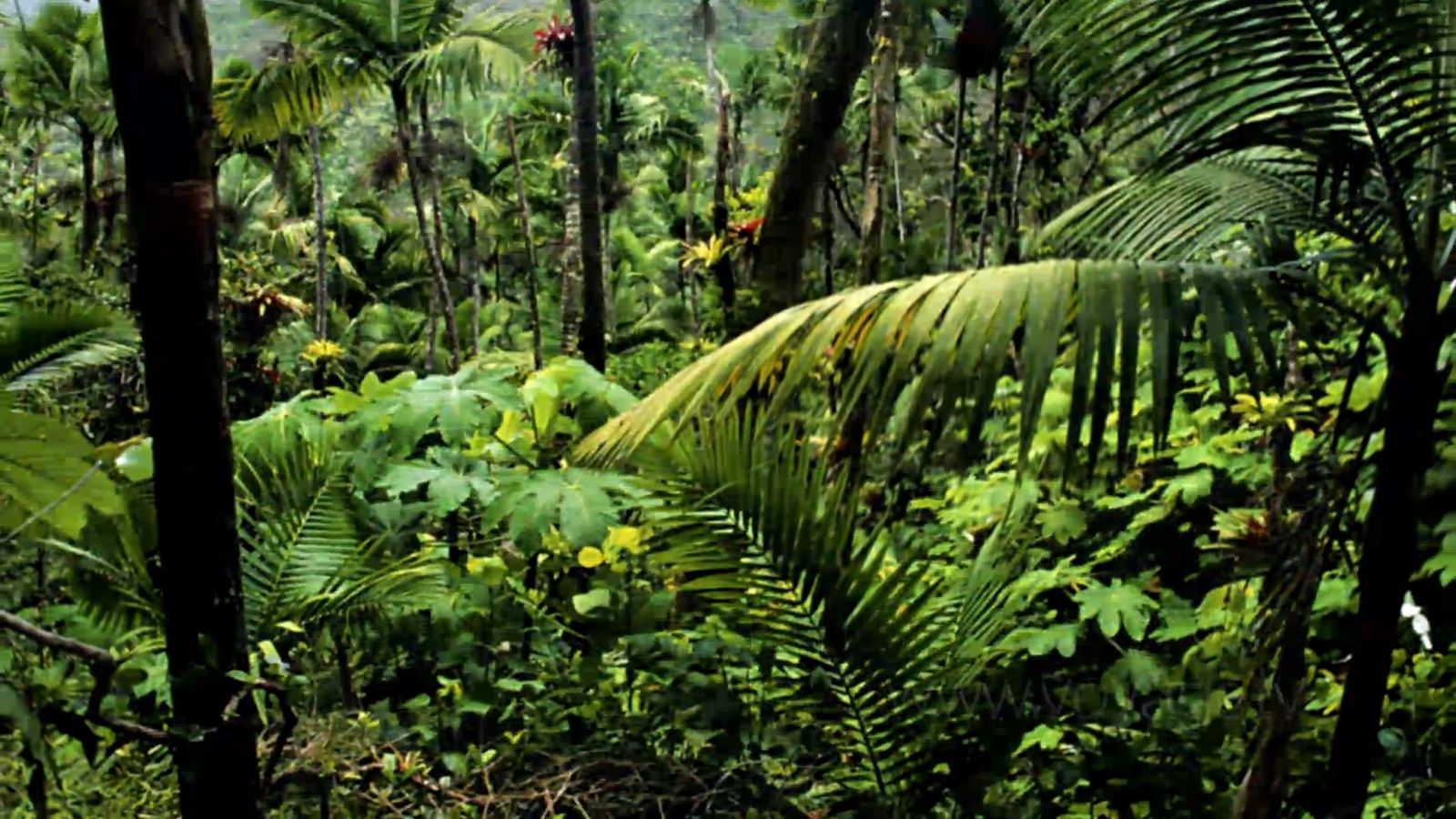 Rainforest Plants In The Amazon Rainforest