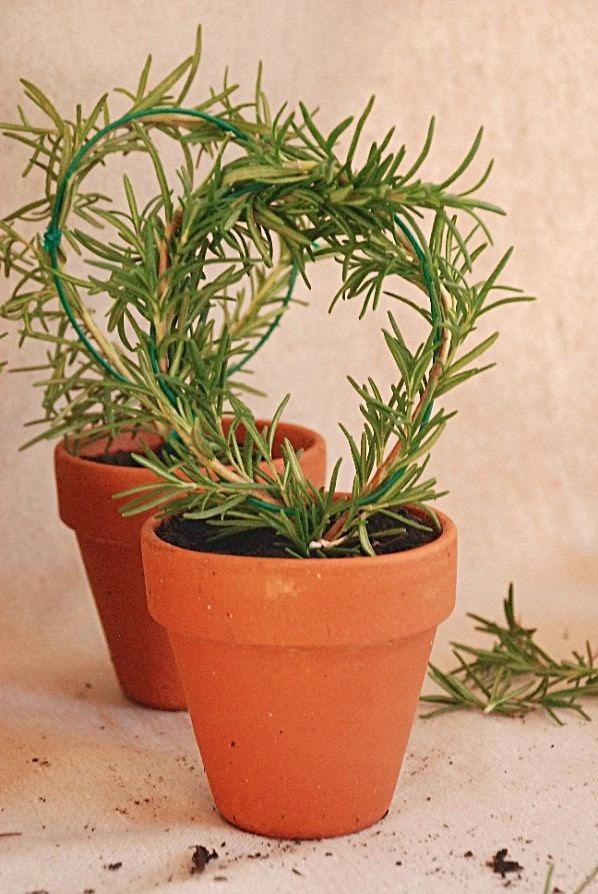 Boas energias das plantas aromáticas