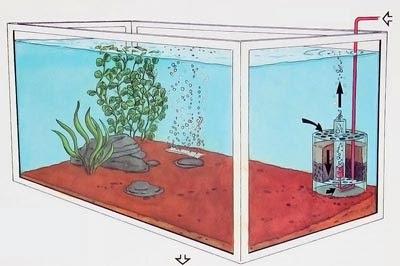 Errores comunes en un acuario