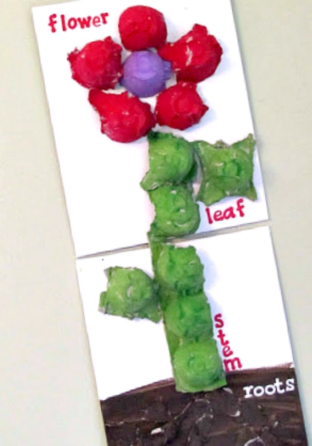 parts of a plant labeling activity