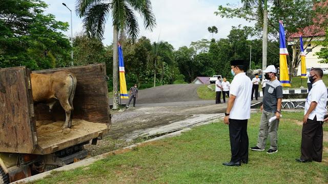 Hendra Lesmana Serahkan Hewan Kurban Idul Adha ke Masjid di 8 Kecamatan di Lamandau