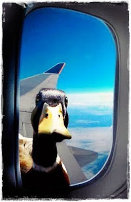 duck-phobia