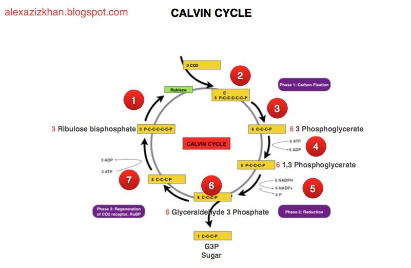 MY NOTES ON JIB 224 - Plant Physiology - alexazizkhan