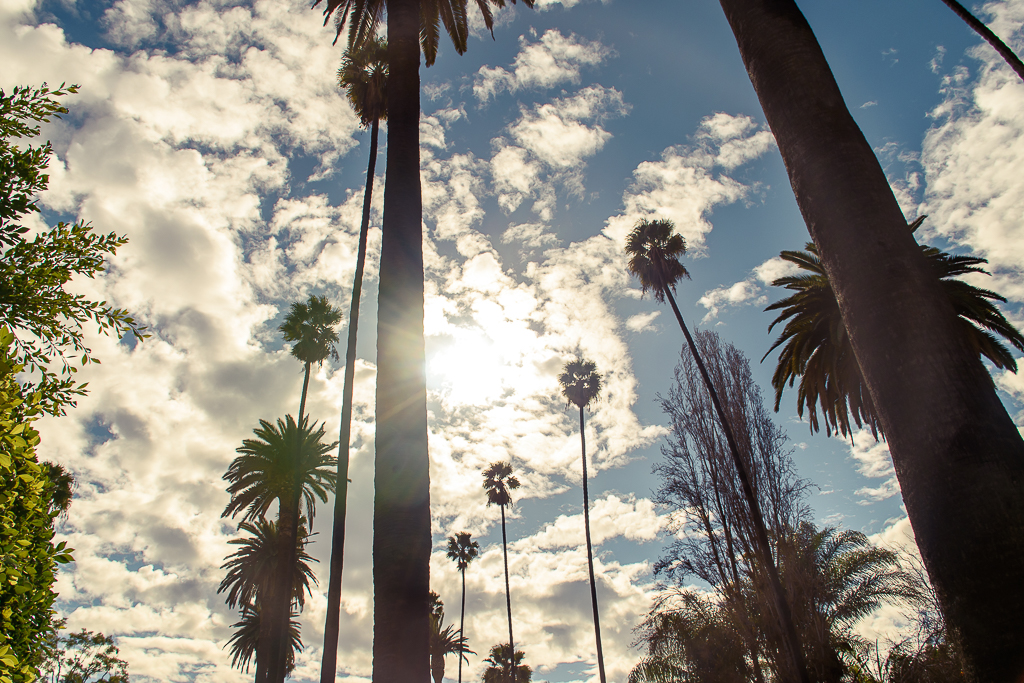 sunsets and palm trees in los angeles california