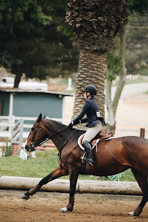 A Bay Show Horse Being Ridden At Extended Canter in a Riding School