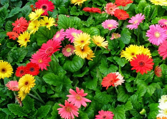 Những Đóa Hoa Thường Cắm Trong Gia Đình Ngày Tết 6