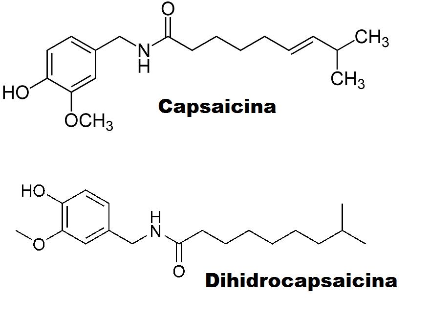 a capsaicina é a substancia responsavel pelo sabor
