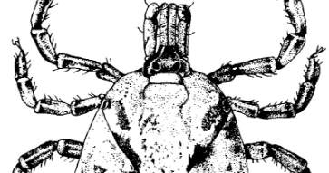 [apostila] Parasitologia Veterinária .pdf