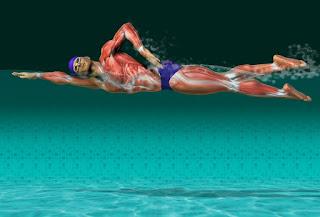 Técnica de natación y ejercicios prácticos