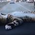 Bahaya tidur dalam kenderaan ketika enjin hidup