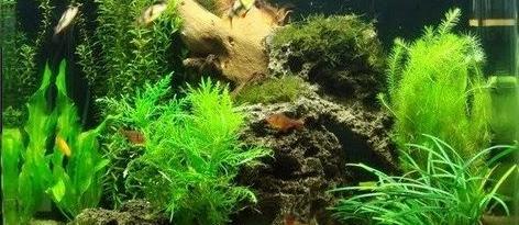 Cara Membuat Hiasan Aquarium Sendiri dengan Harga Murah