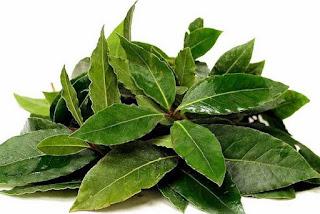 manfaat daun salam untuk pengobatan dan kecantikan