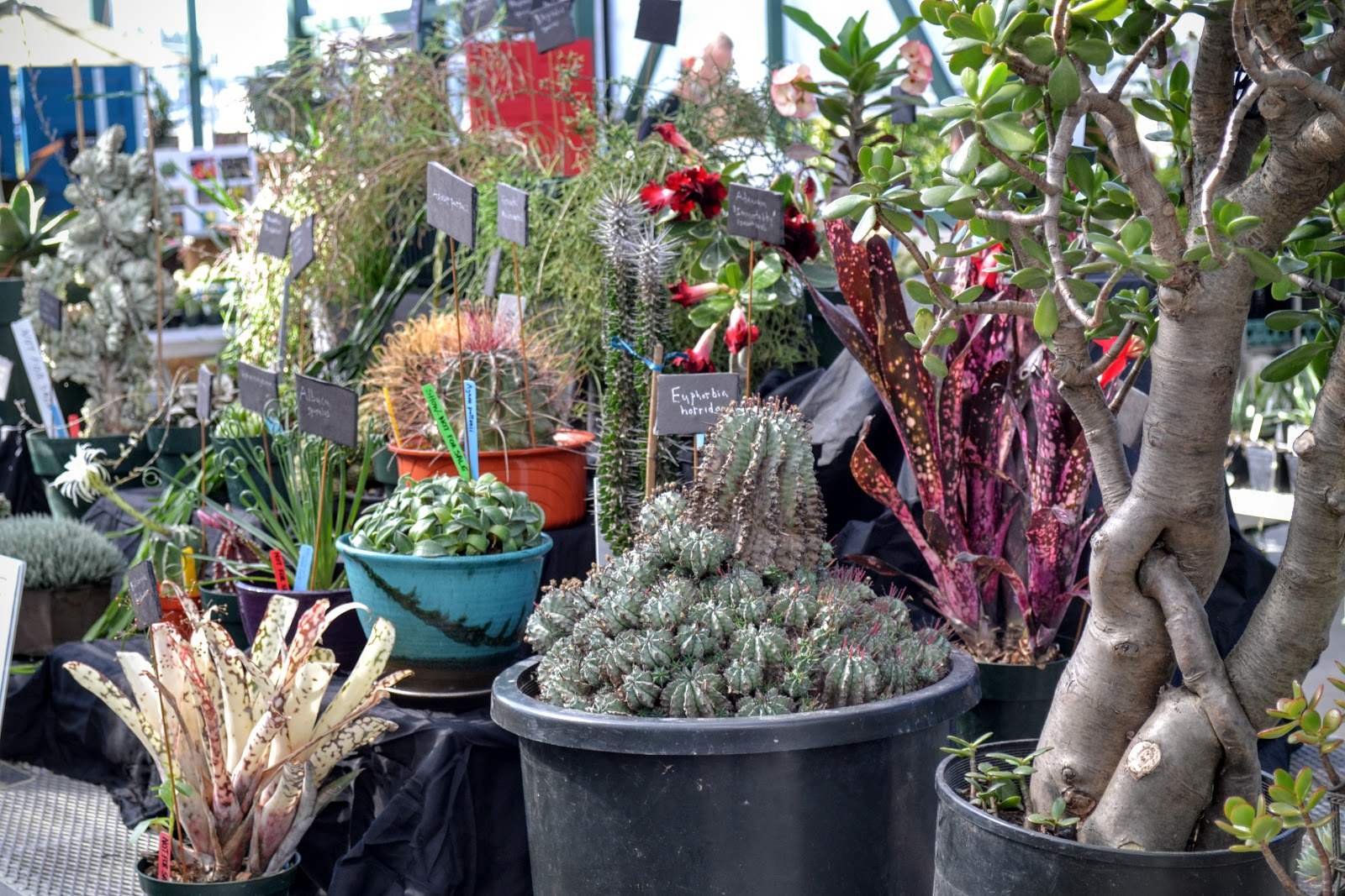 Cactus Pots For Sale The Outlaw Gardener Cascade Cactus And Succulent Society