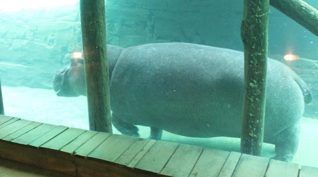 IMG 3829 - Wildlands Adventure Zoo Emmen