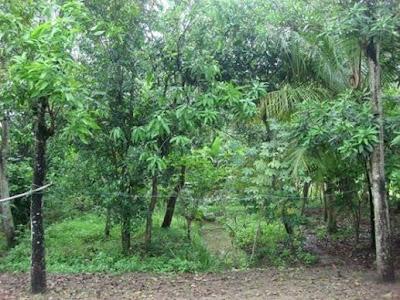 Desa Ujung Jaya