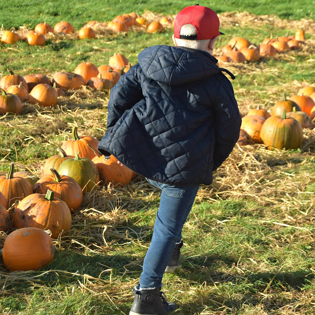 pumpkin patches in lincolnshire
