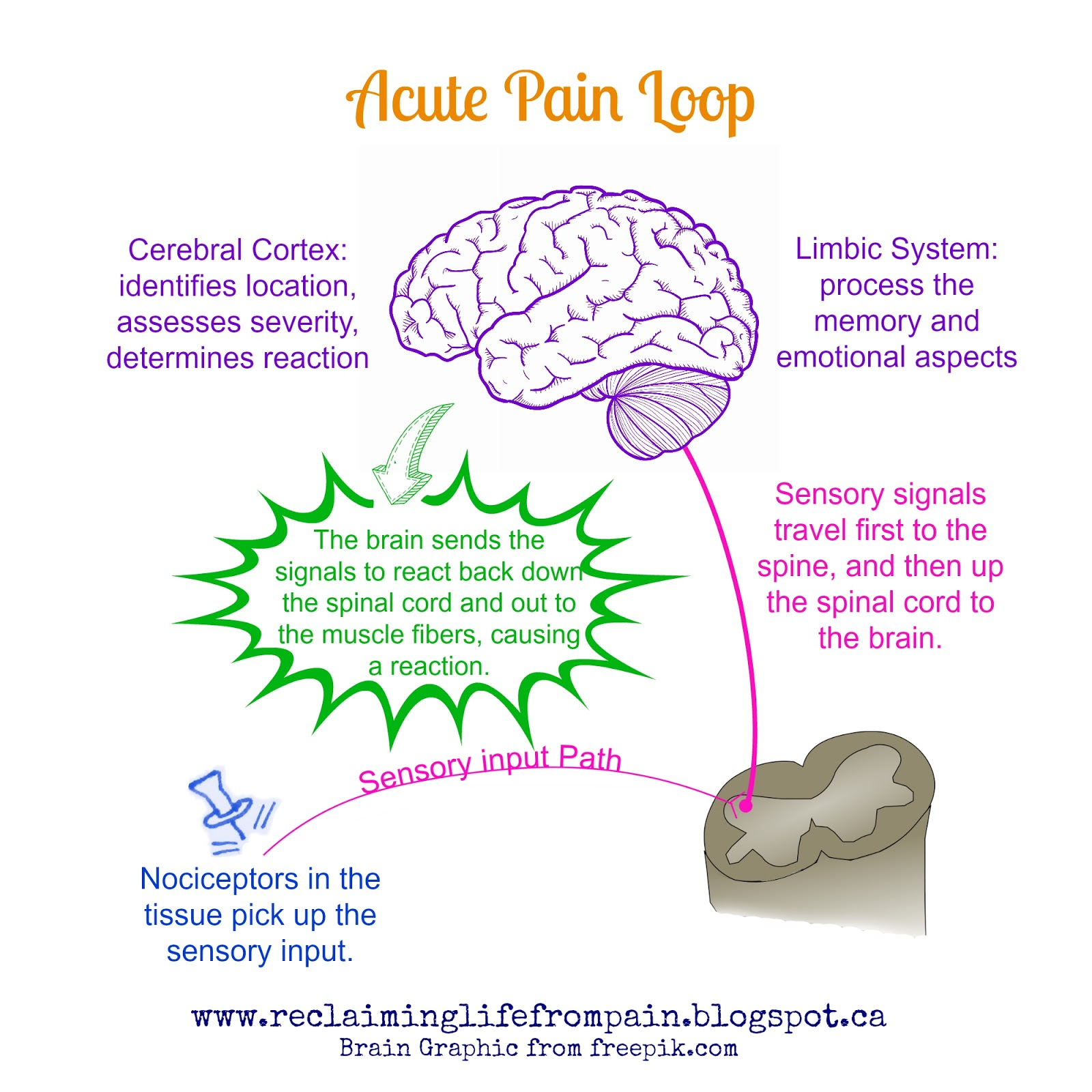 small resolution of the following diagram is a simplified version of what happens in the body and brain when pain is experienced the painful stimulus is recognized and our
