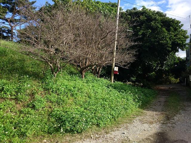 ウフンミウタキに隣接する砂利道の写真