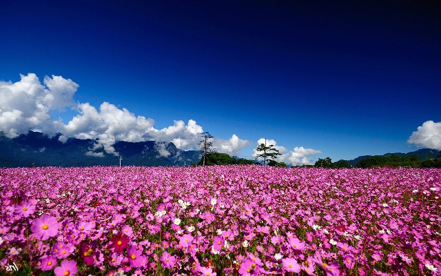 Pretty Field Of Flower Pictures