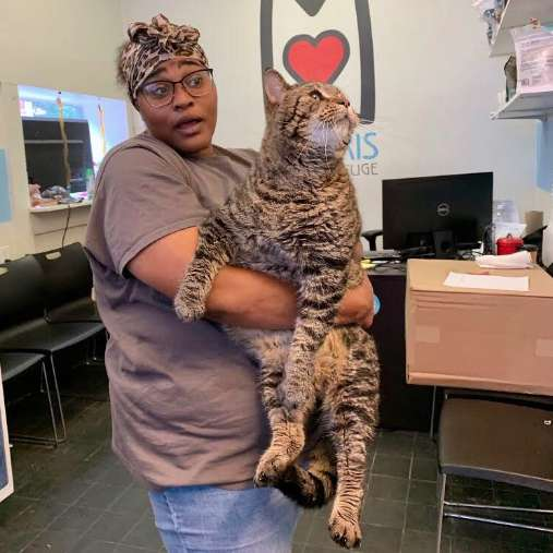 The World's Chubbiest Cat Is Looking For Her Forever Human