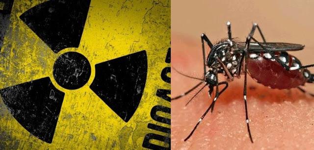 MOSQUITOS RADIOATIVOS: AIEA FORNECE TÉCNICA NUCLEAR PARA AJUDAR BRASIL NO COMBATE AO ZIKA