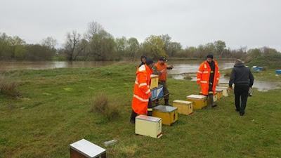 Στην ομάδα λένε: Ευχαριστώ Μελισσοκομικό Σύλλογο Βέροιας και τα μέλη του που έσωσαν τα μελισσια μου από τον πνιγμό
