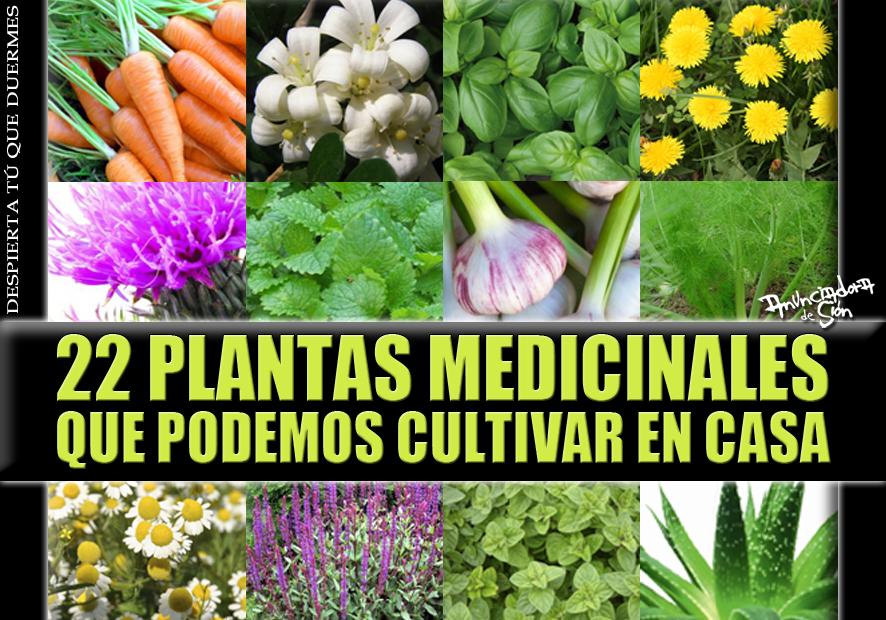 22 plantas medicinales que podemos cultivar en casa for Que se planta en septiembre