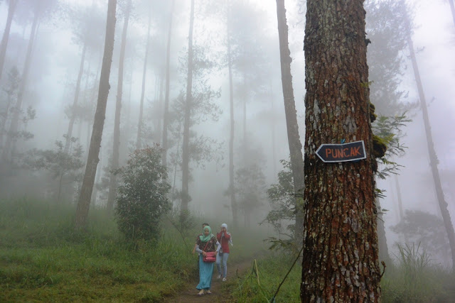 grenden, pendakian, gunung merbabu, pogalan, magelang