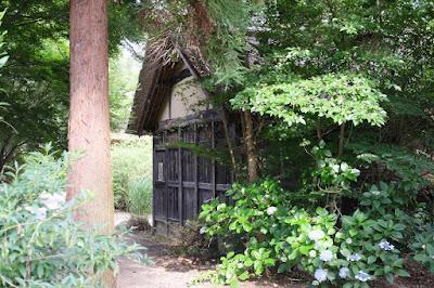 安曇野の大王わさび農場散策 水車小屋と紫陽花