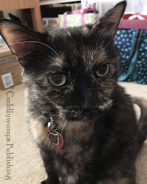 #tortiecats #whiskers