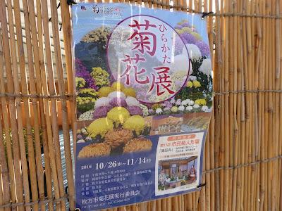 ひらかた菊花展 (岡東中央公園・枚方市役所周辺) ちらし