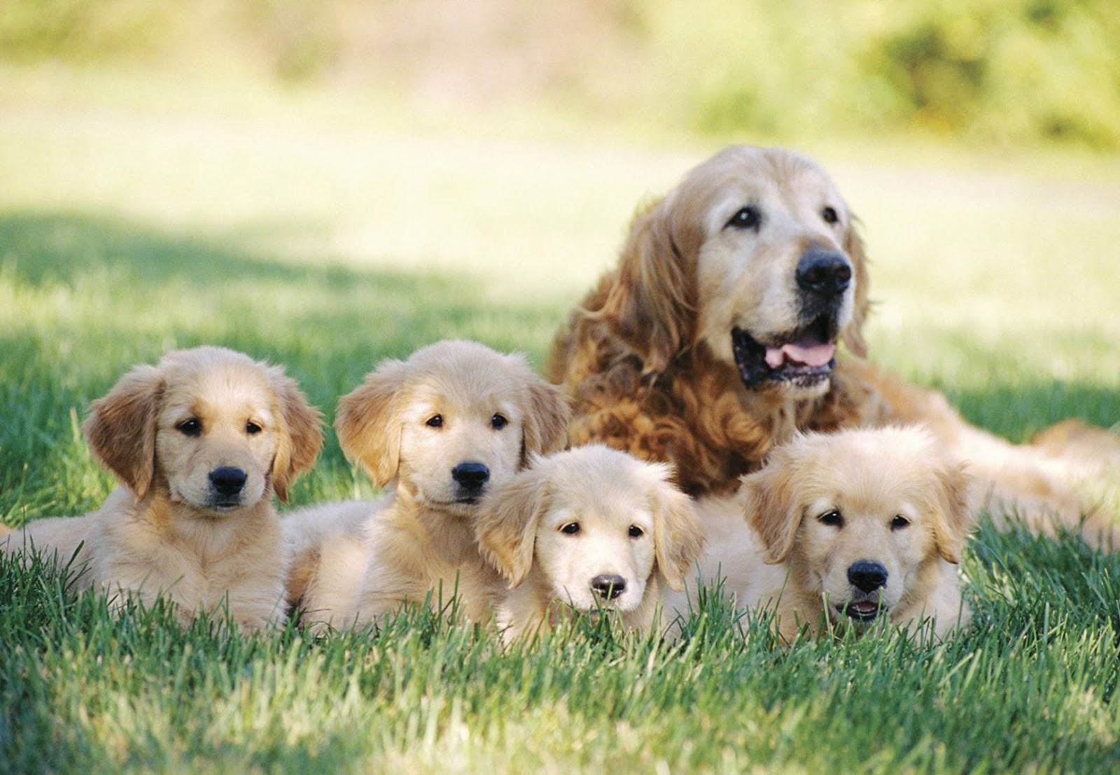 BLOG OF CUTE PUPPIES PICTURES