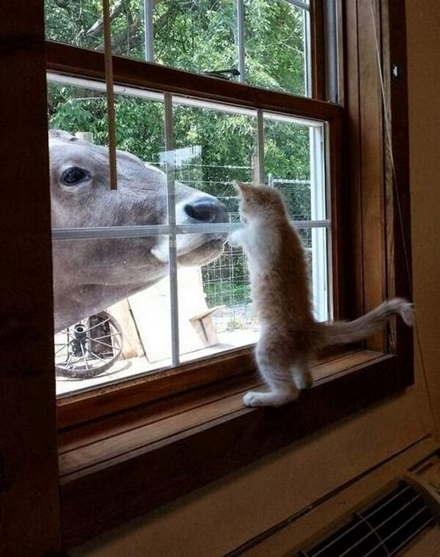 Funny animals of the week - 6 May 2016, best funny animals, cute animal photos, funny animal gallery