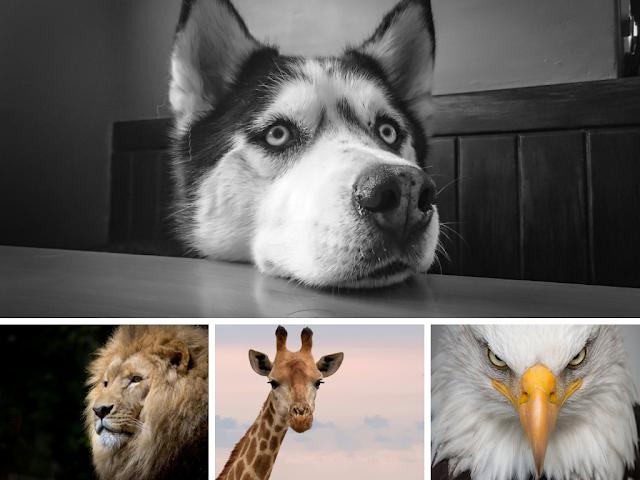Oxitrivia: ¿Qué tanto sabes sobre los animales?