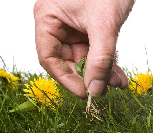 Control weeds | Garden Bible