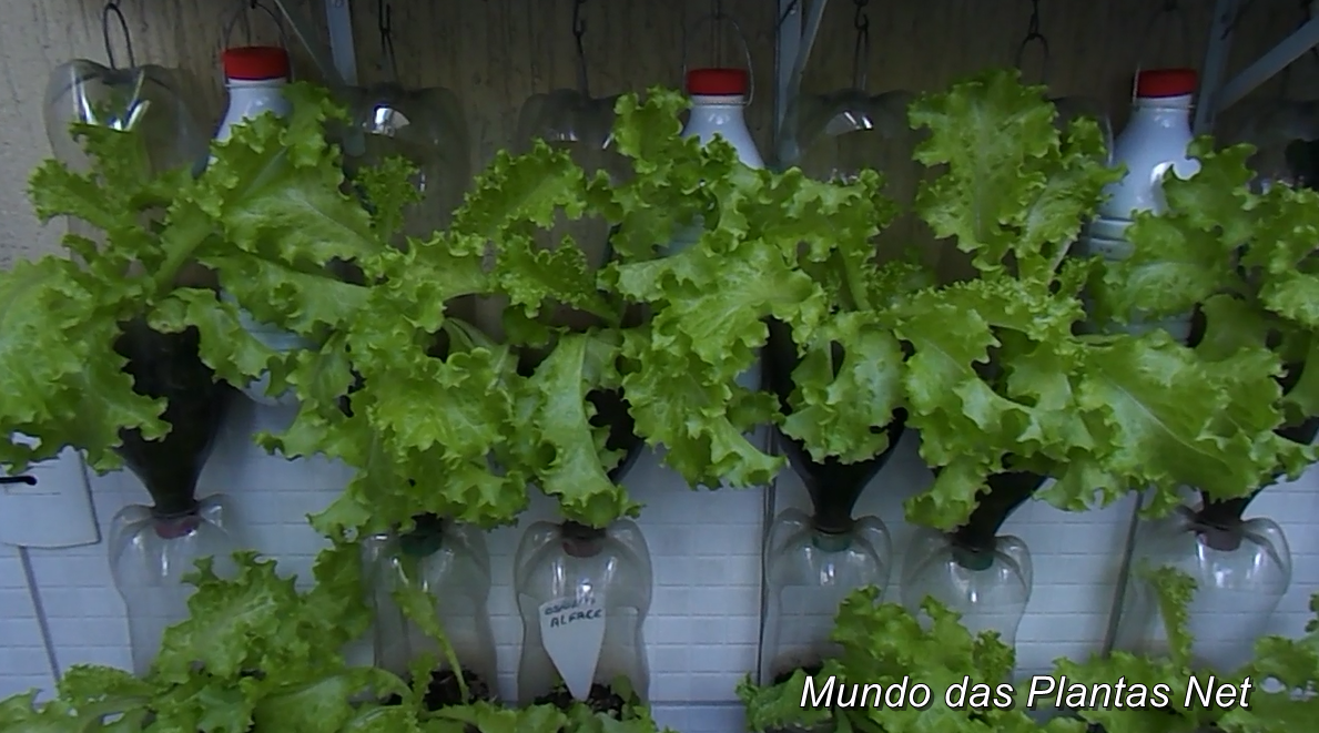 Preferência Mundo das Plantas : Horta com Garrafas Pet, Irrigação Automática IQ46