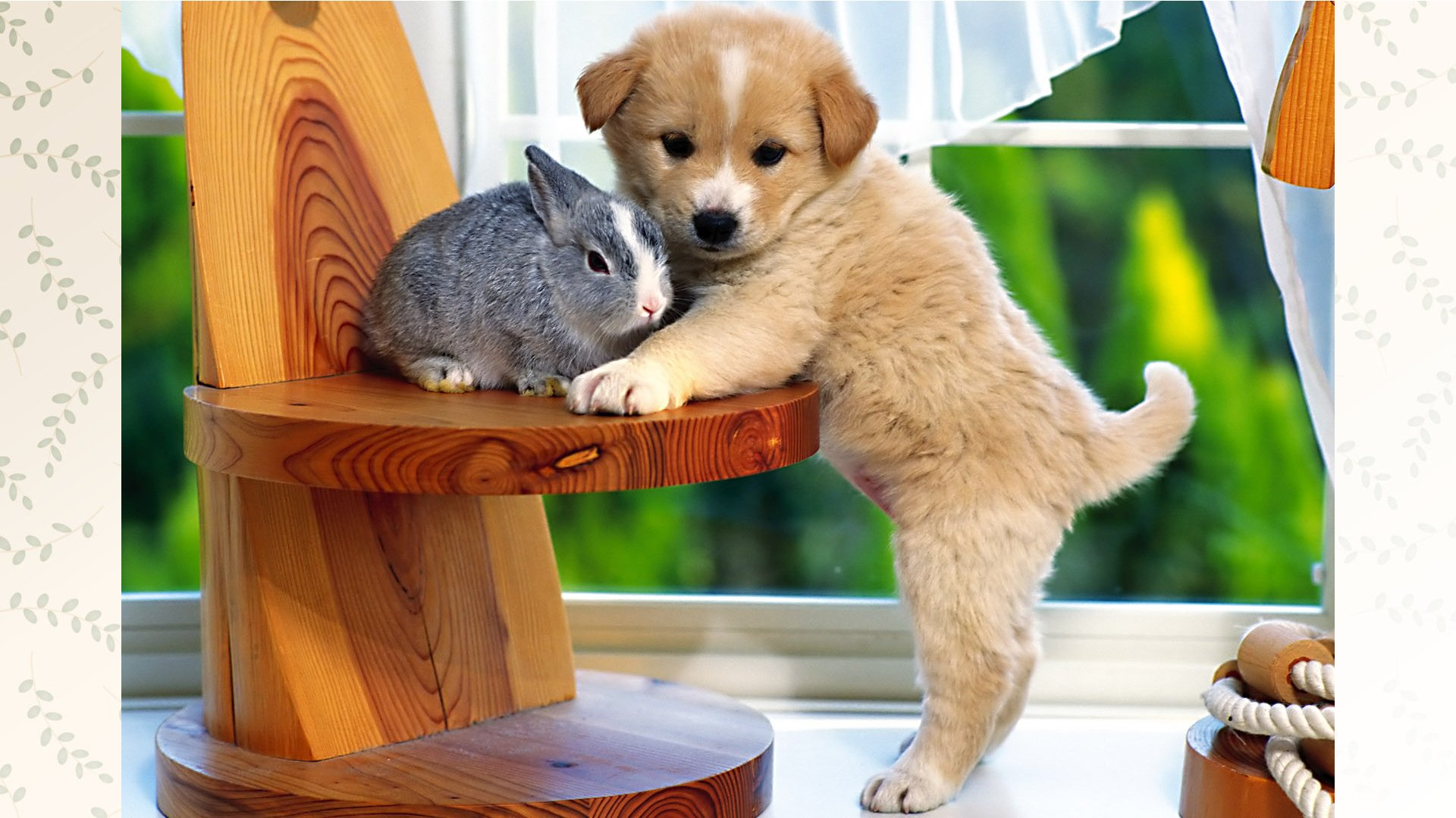 Bunny And Puppy Dog Full Hd Desktop Wallpapers 1080p Cute Dog Wallpapers