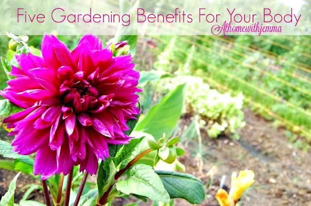 Gardening-Dahlia- organic-sleeping-better-Jemma
