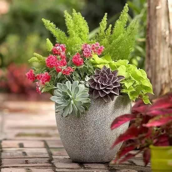 Ιδέες για συνδυασμούς φυτών στην ίδια γλάστρα